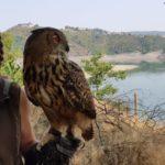 2. Tag am Edersee und der Wildtierpark