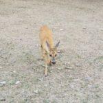 3. Tag am Edersee und noch mal im Wildtierpark