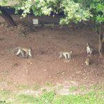 5. Tag in Mombasa und die Affenbande