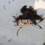 4. Tag in Mombasa – Überall Eidechsen und Krabben