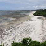 Der 7. Tag in Mombasa – Unter ständiger Beobachtung