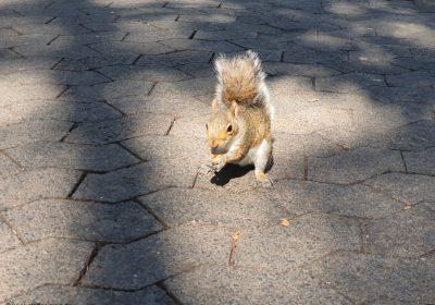 Companys Garden Eichhörnchen